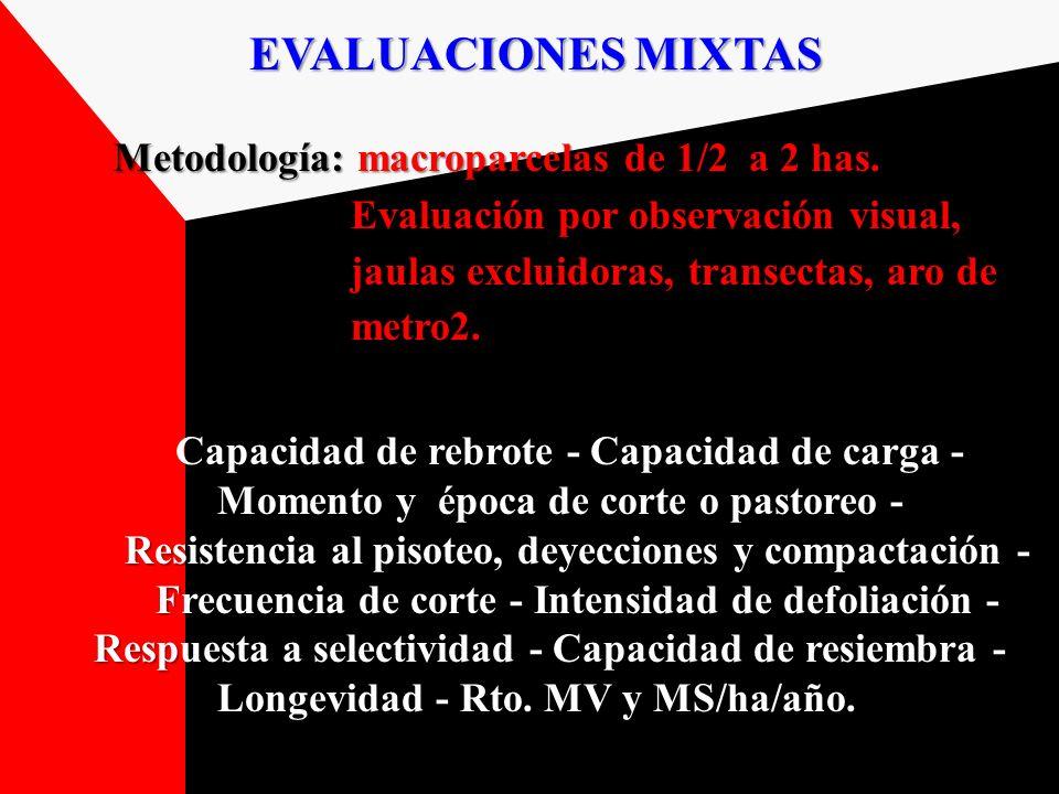 Metodología: macroparcelas de 1/2 a 2 has.