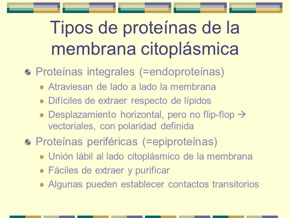 Tipos de proteínas de la membrana citoplásmica