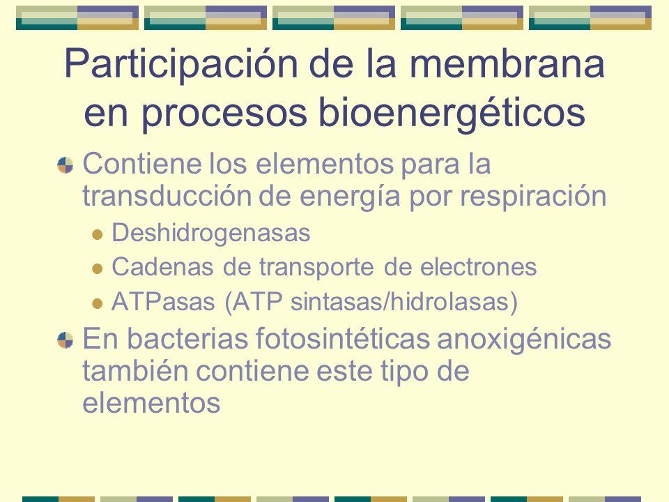 Participación de la membrana en procesos bioenergéticos