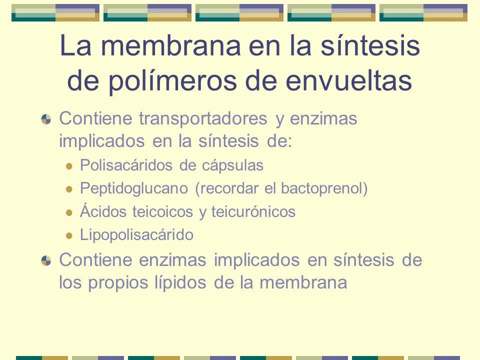La membrana en la síntesis de polímeros de envueltas