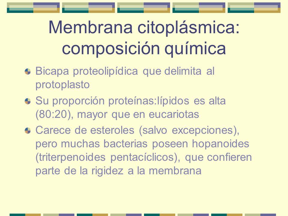 Membrana citoplásmica: composición química