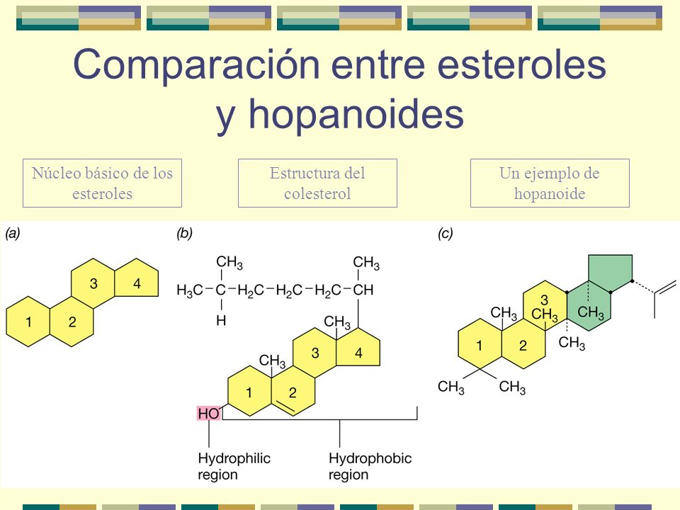 Comparación entre esteroles y hopanoides
