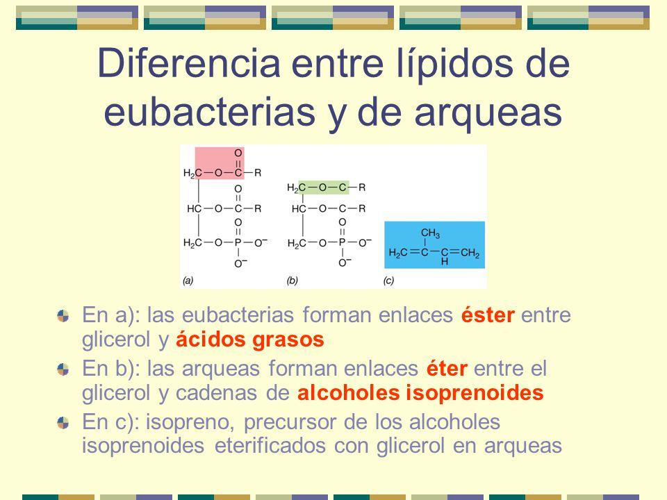 Diferencia entre lípidos de eubacterias y de arqueas