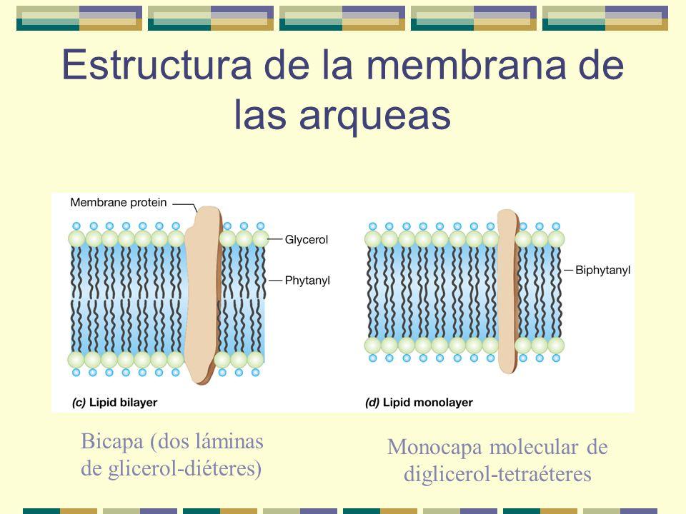 Estructura de la membrana de las arqueas
