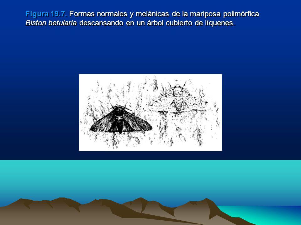 Figura 19.7.