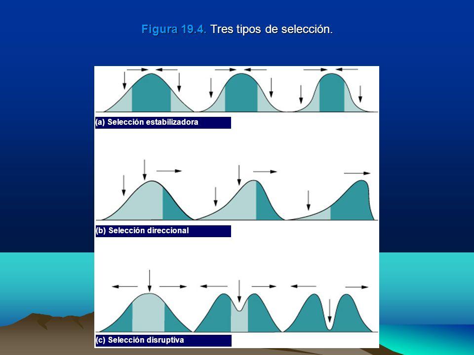 Figura 19.4. Tres tipos de selección.
