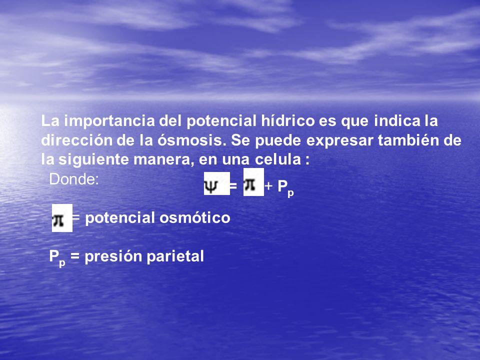La importancia del potencial hídrico es que indica la dirección de la ósmosis. Se puede expresar también de la siguiente manera, en una celula :