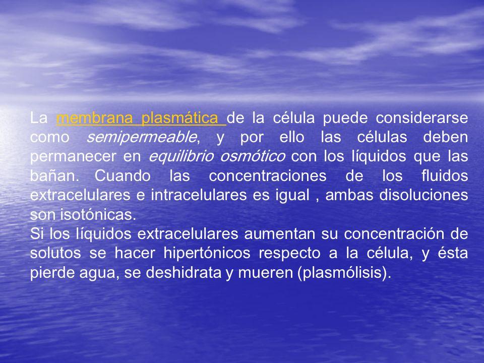 La membrana plasmática de la célula puede considerarse como semipermeable, y por ello las células deben permanecer en equilibrio osmótico con los líquidos que las bañan. Cuando las concentraciones de los fluidos extracelulares e intracelulares es igual , ambas disoluciones son isotónicas.