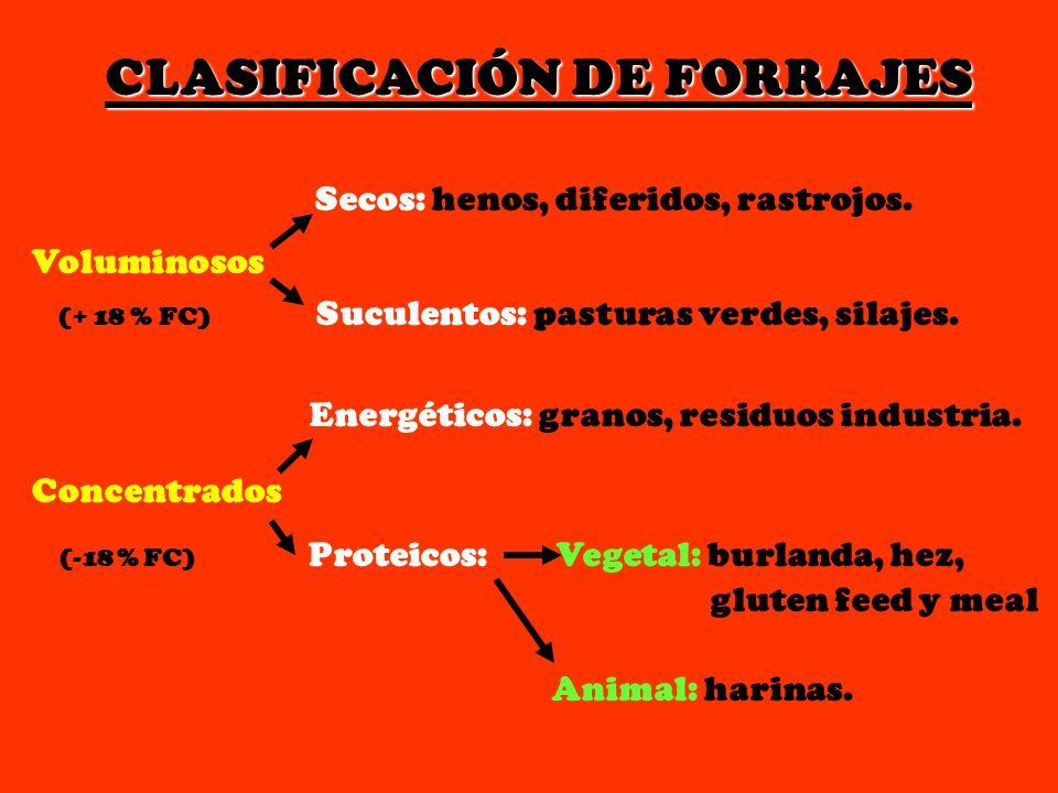 CLASIFICACIÓN DE FORRAJES