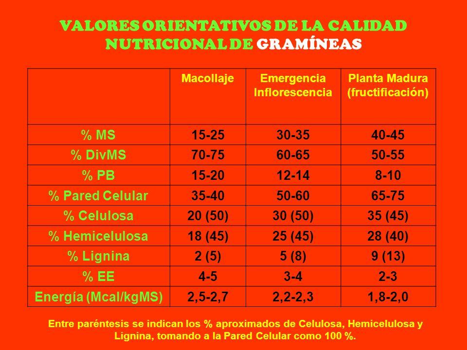 VALORES ORIENTATIVOS DE LA CALIDAD NUTRICIONAL DE GRAMÍNEAS