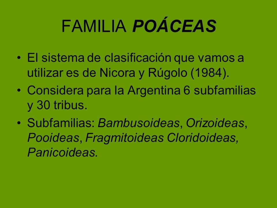 FAMILIA POÁCEASEl sistema de clasificación que vamos a utilizar es de Nicora y Rúgolo (1984). Considera para la Argentina 6 subfamilias y 30 tribus.