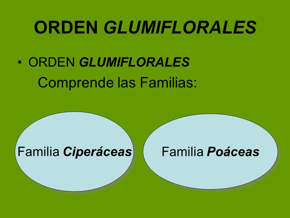 ORDEN GLUMIFLORALES Comprende las Familias: ORDEN GLUMIFLORALES