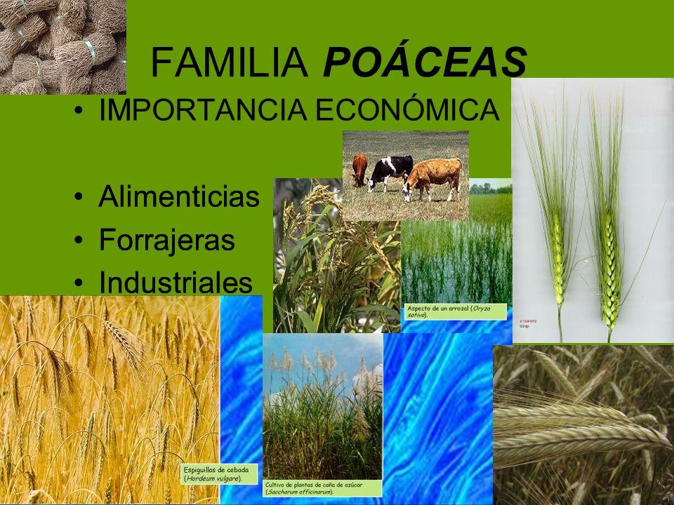 FAMILIA POÁCEAS IM Alimenticias Forrajeras Industriales