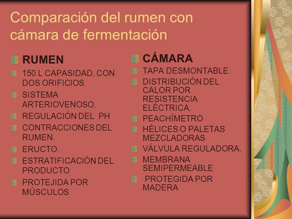 Comparación del rumen con cámara de fermentación