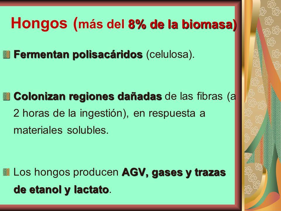 Hongos (más del 8% de la biomasa)