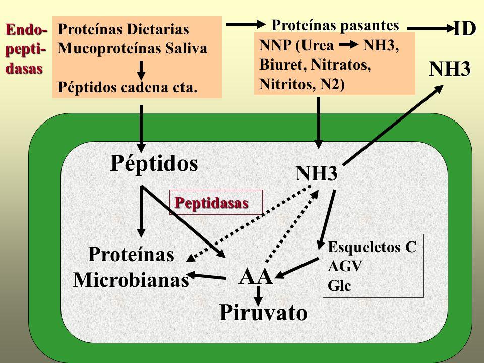 Proteínas Microbianas