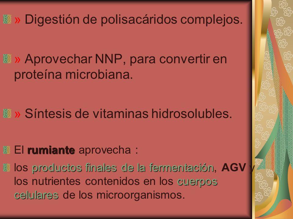 » Digestión de polisacáridos complejos.