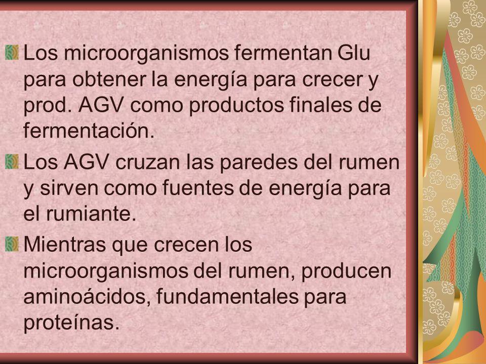 Los microorganismos fermentan Glu para obtener la energía para crecer y prod. AGV como productos finales de fermentación.
