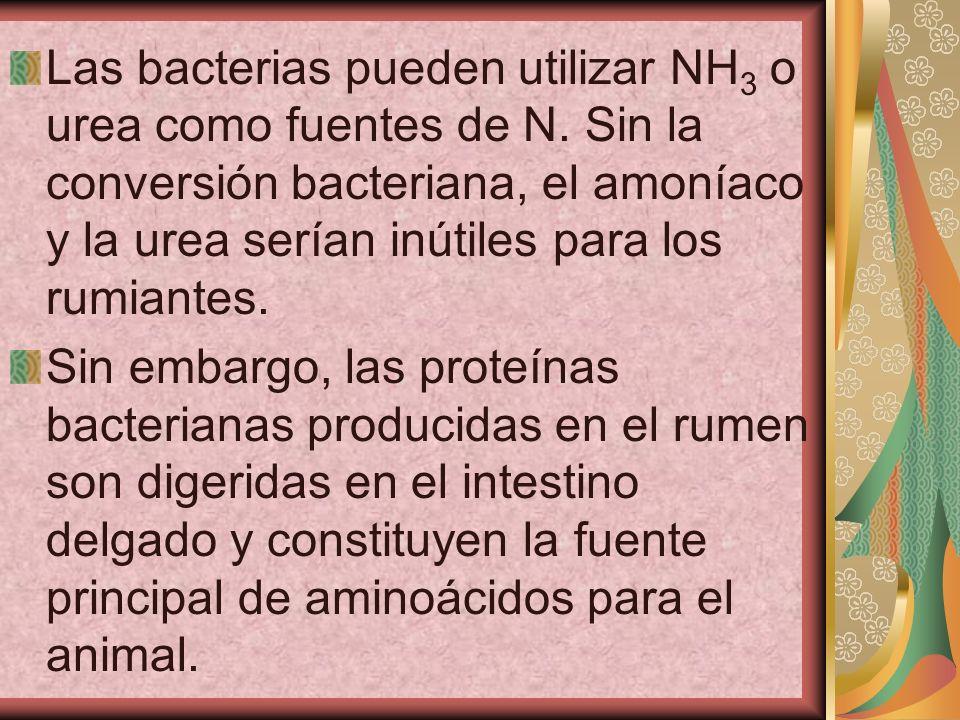 Las bacterias pueden utilizar NH3 o urea como fuentes de N