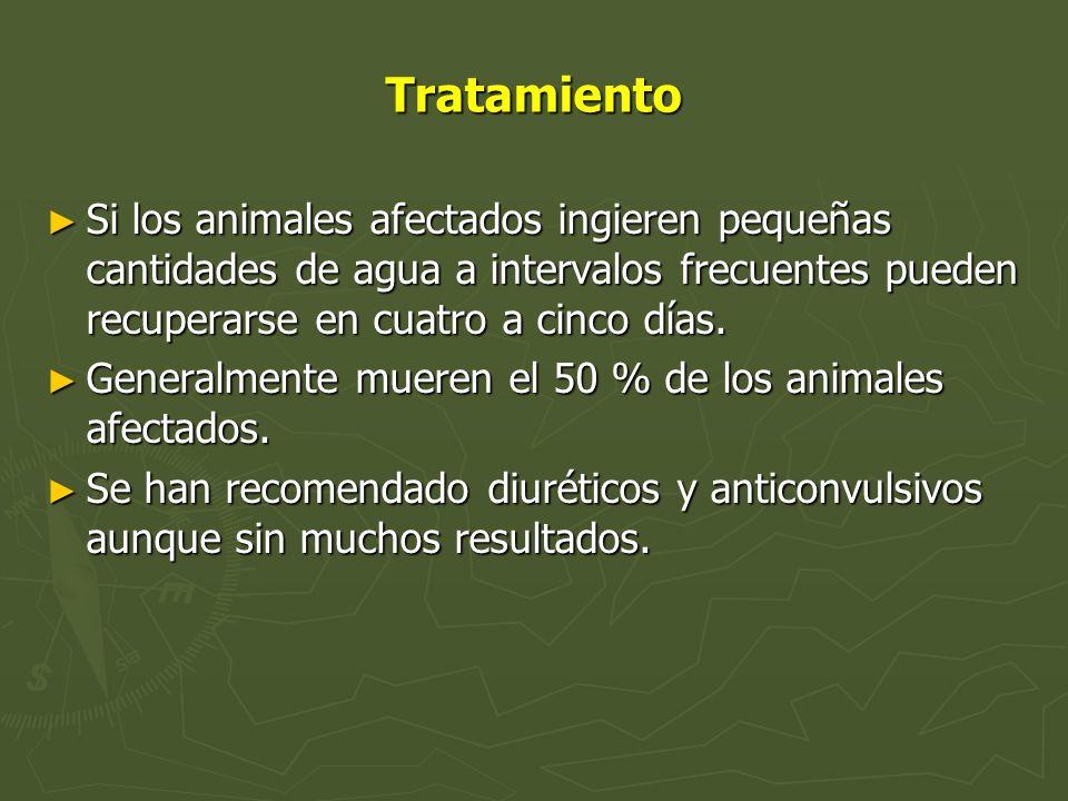 Tratamiento Si los animales afectados ingieren pequeñas cantidades de agua a intervalos frecuentes pueden recuperarse en cuatro a cinco días.