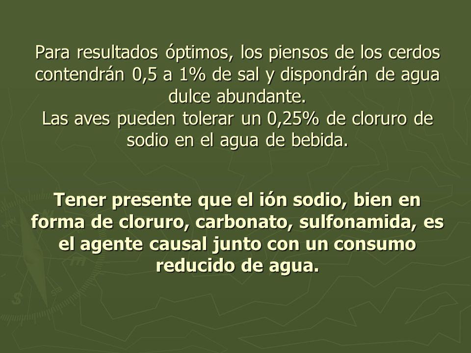 Para resultados óptimos, los piensos de los cerdos contendrán 0,5 a 1% de sal y dispondrán de agua dulce abundante.