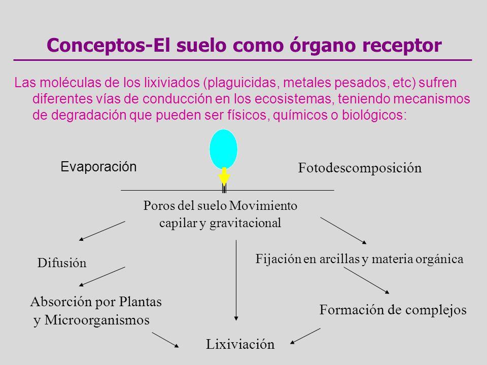 Conceptos-El suelo como órgano receptor