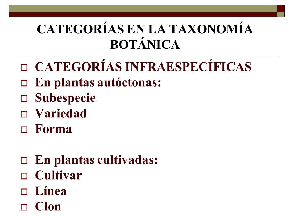 CATEGORÍAS EN LA TAXONOMÍA BOTÁNICA