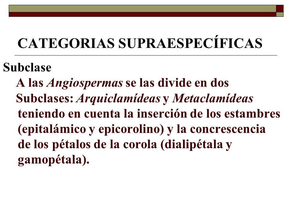 CATEGORIAS SUPRAESPECÍFICAS
