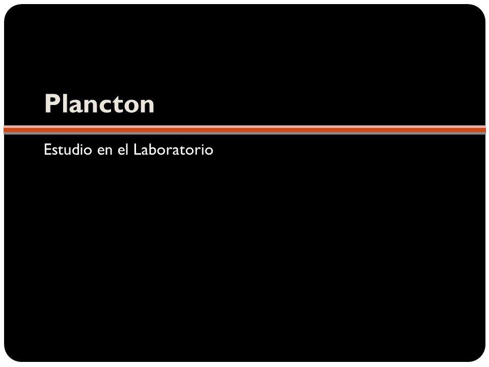 Plancton Estudio en el Laboratorio
