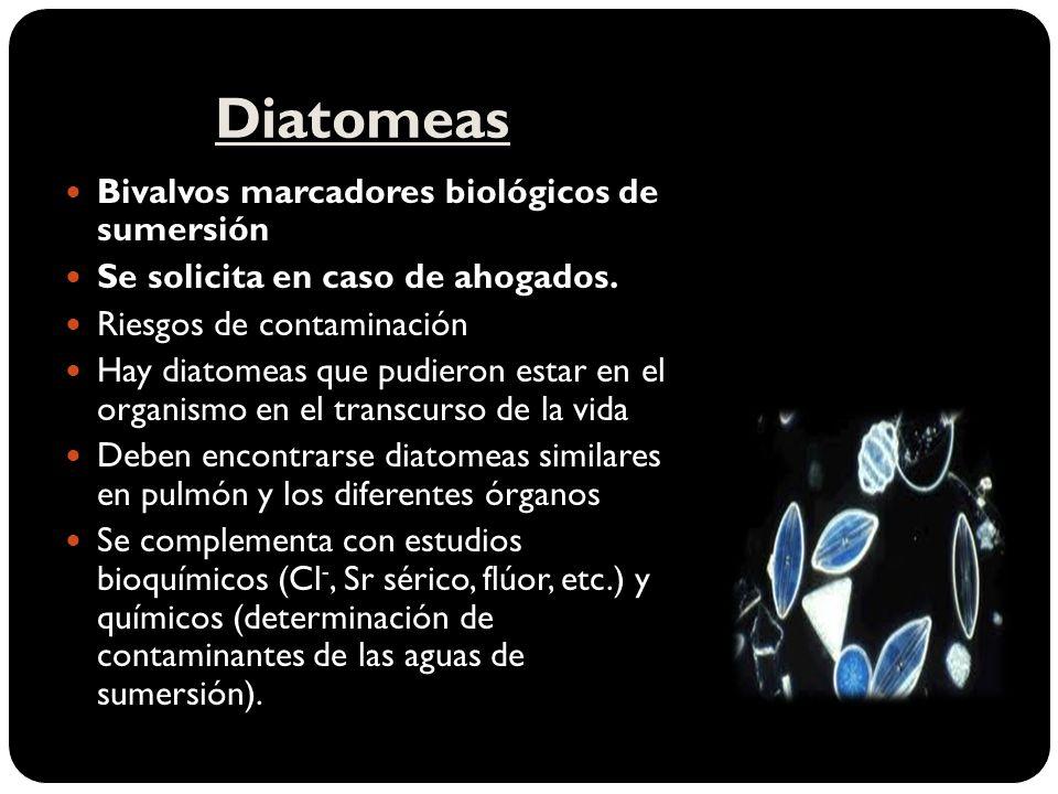 Diatomeas Bivalvos marcadores biológicos de sumersión