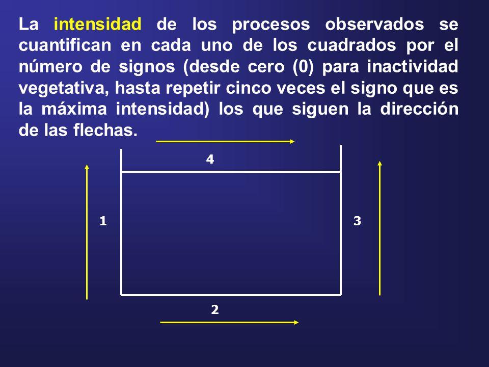 La intensidad de los procesos observados se cuantifican en cada uno de los cuadrados por el número de signos (desde cero (0) para inactividad vegetativa, hasta repetir cinco veces el signo que es la máxima intensidad) los que siguen la dirección de las flechas.