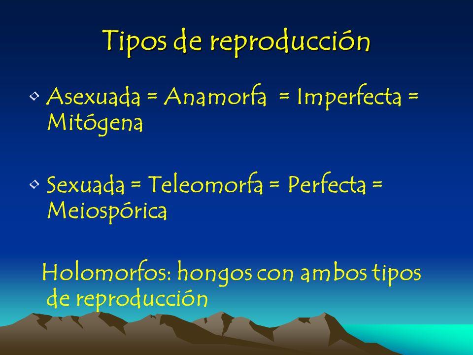 Tipos de reproducción Asexuada = Anamorfa = Imperfecta = Mitógena
