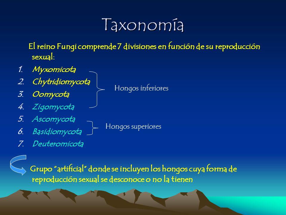 Taxonomía Myxomicota Chytridiomycota Oomycota Zigomycota Ascomycota