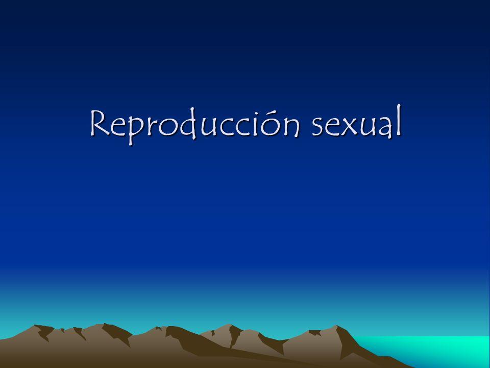Reproducción sexual