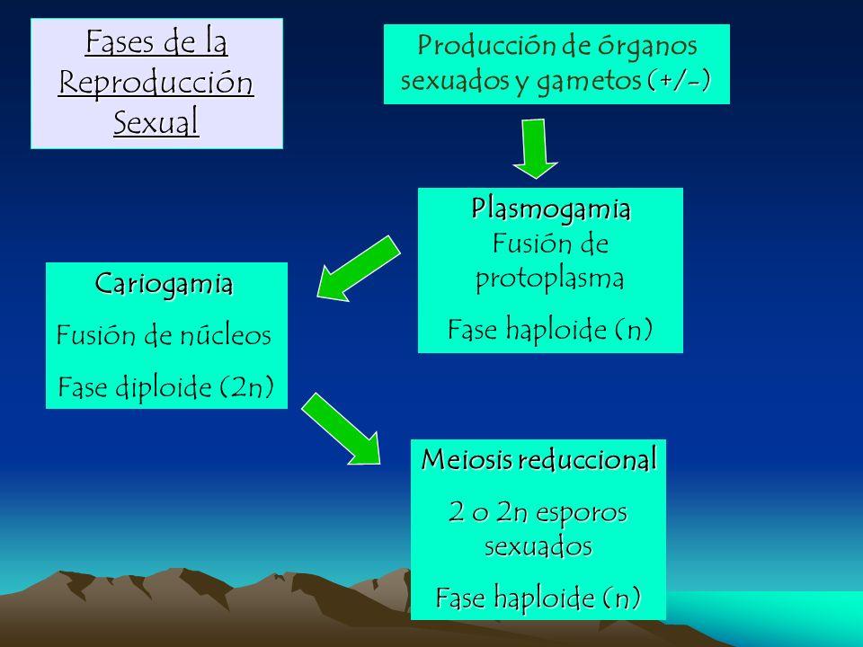 Fases de la Reproducción Sexual