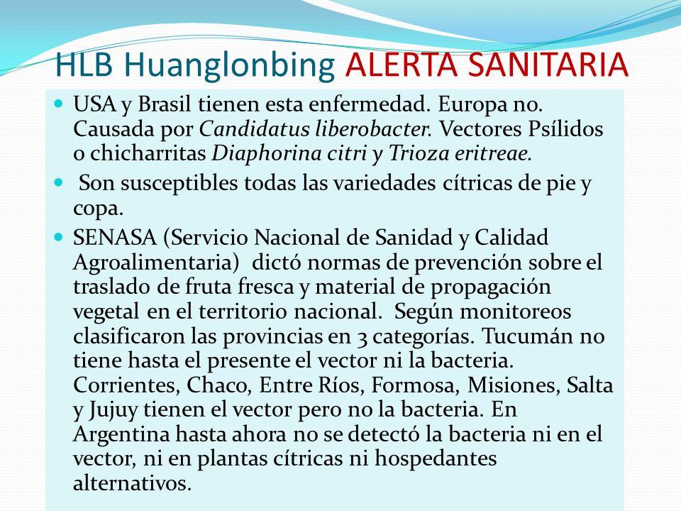 HLB Huanglonbing ALERTA SANITARIA