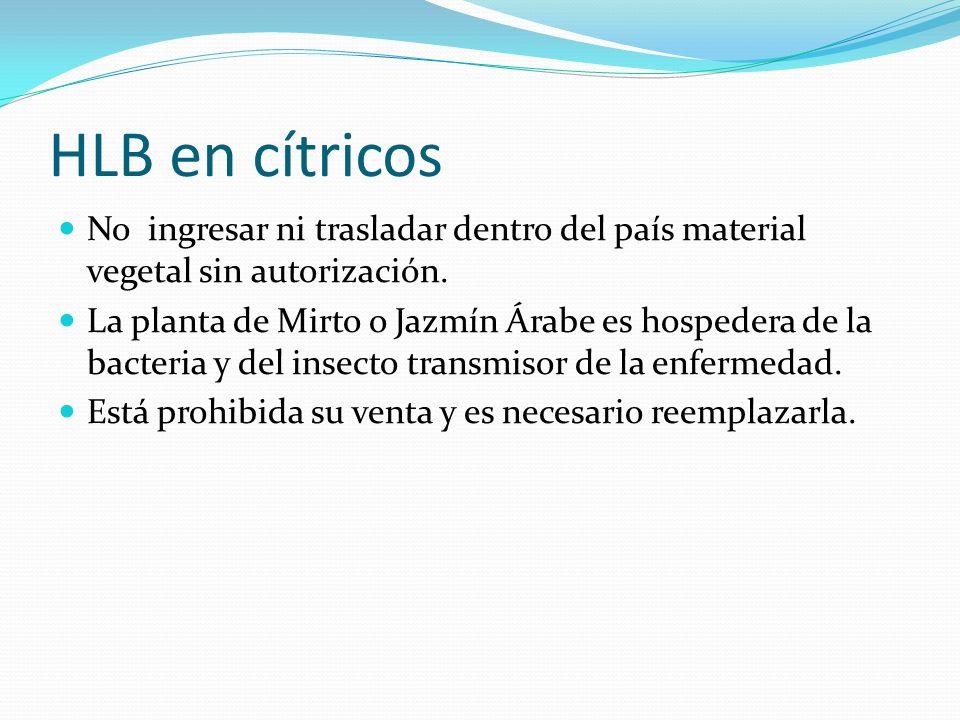 HLB en cítricos No ingresar ni trasladar dentro del país material vegetal sin autorización.
