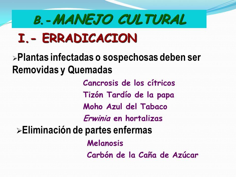 I.- ERRADICACION B.- MANEJO CULTURAL Tizón Tardío de la papa