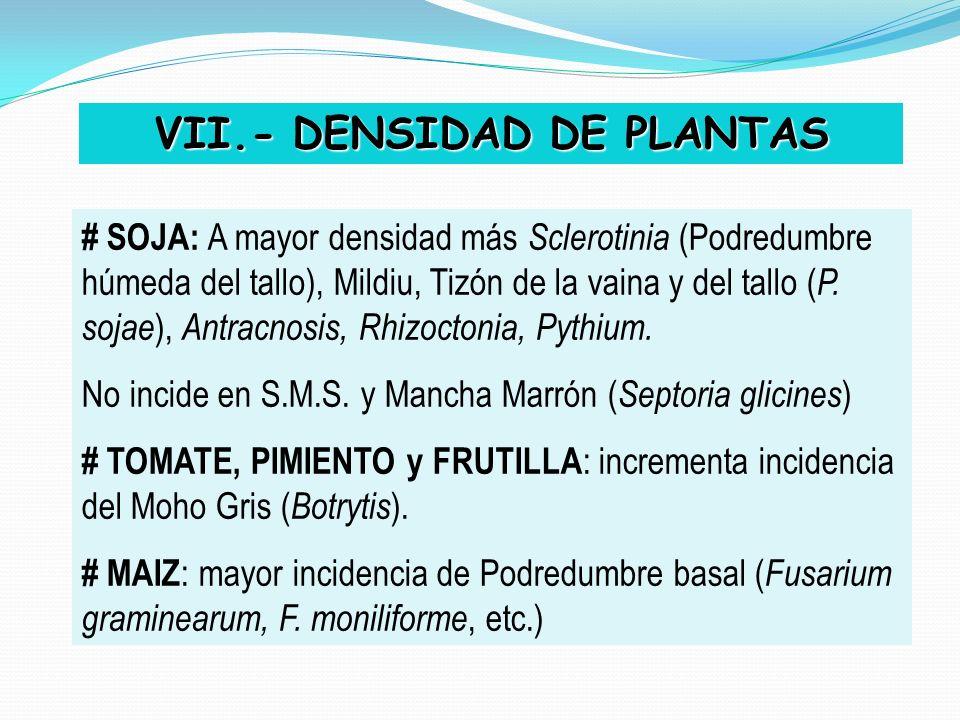 VII.- DENSIDAD DE PLANTAS