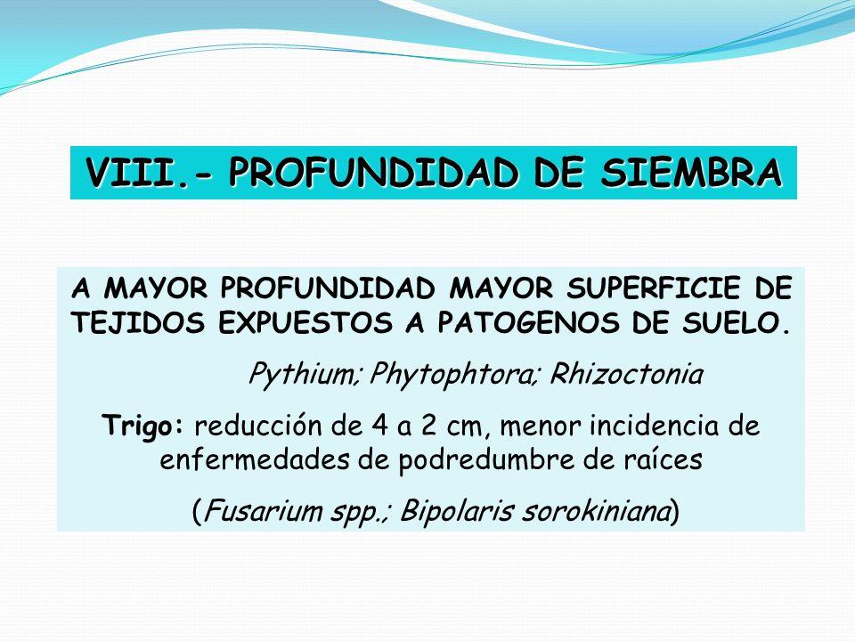 VIII.- PROFUNDIDAD DE SIEMBRA