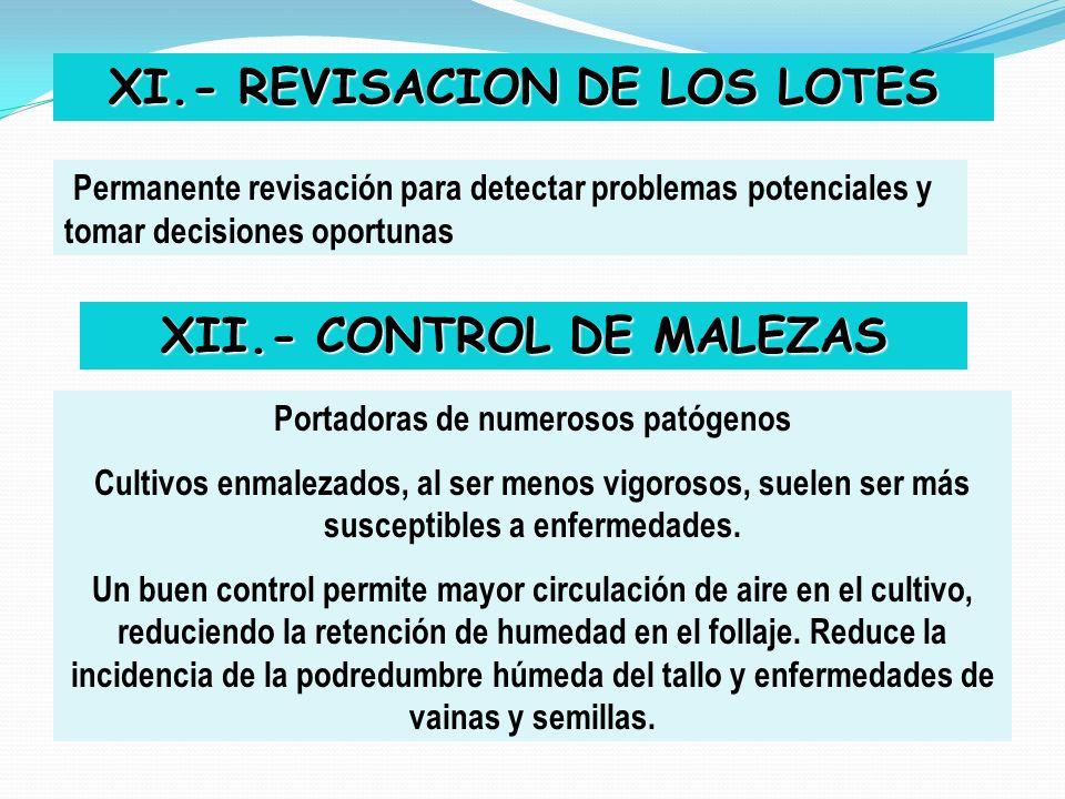 XI.- REVISACION DE LOS LOTES XII.- CONTROL DE MALEZAS