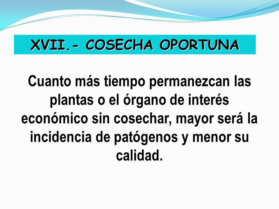 XVII.- COSECHA OPORTUNA