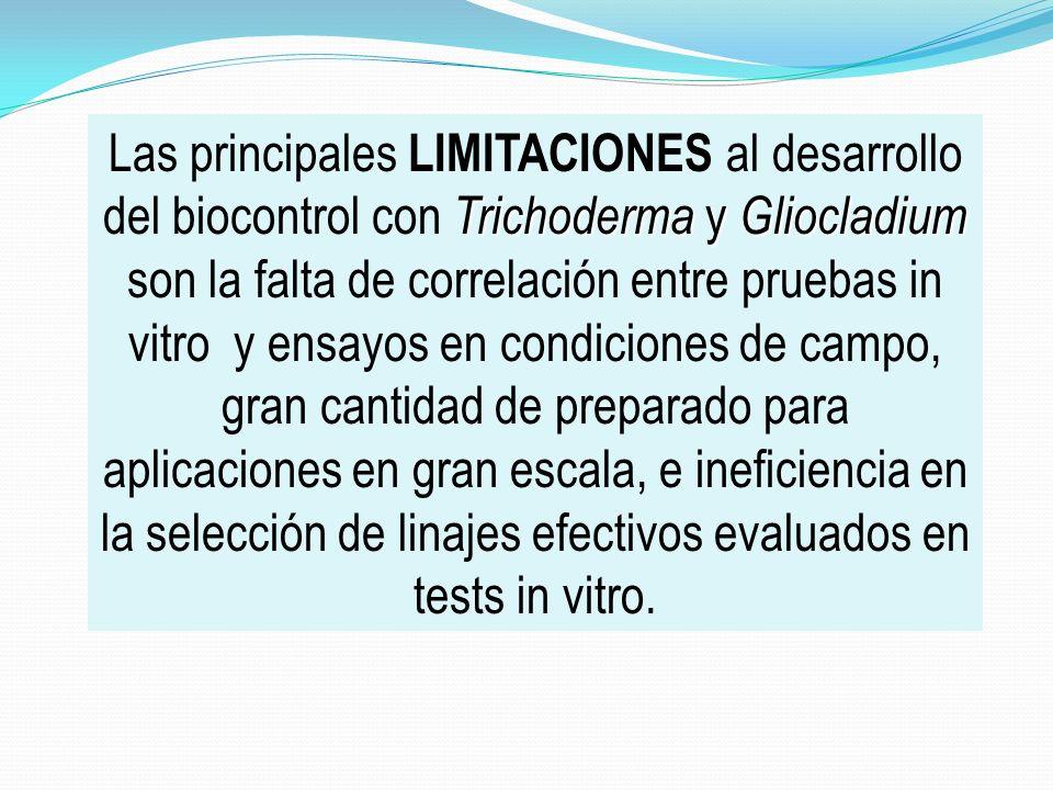 Las principales LIMITACIONES al desarrollo del biocontrol con Trichoderma y Gliocladium son la falta de correlación entre pruebas in vitro y ensayos en condiciones de campo, gran cantidad de preparado para aplicaciones en gran escala, e ineficiencia en la selección de linajes efectivos evaluados en tests in vitro.