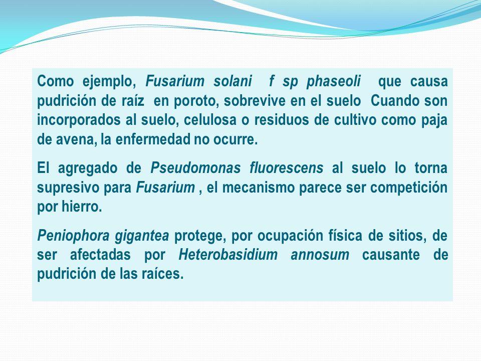 Como ejemplo, Fusarium solani f sp phaseoli que causa pudrición de raíz en poroto, sobrevive en el suelo Cuando son incorporados al suelo, celulosa o residuos de cultivo como paja de avena, la enfermedad no ocurre.
