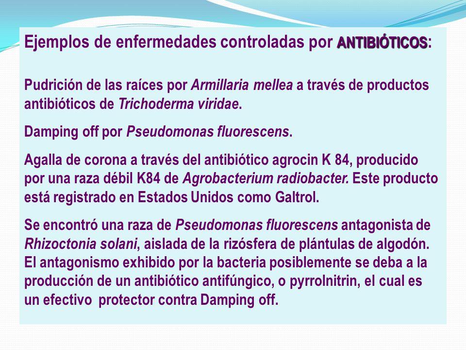 Ejemplos de enfermedades controladas por ANTIBIÓTICOS: