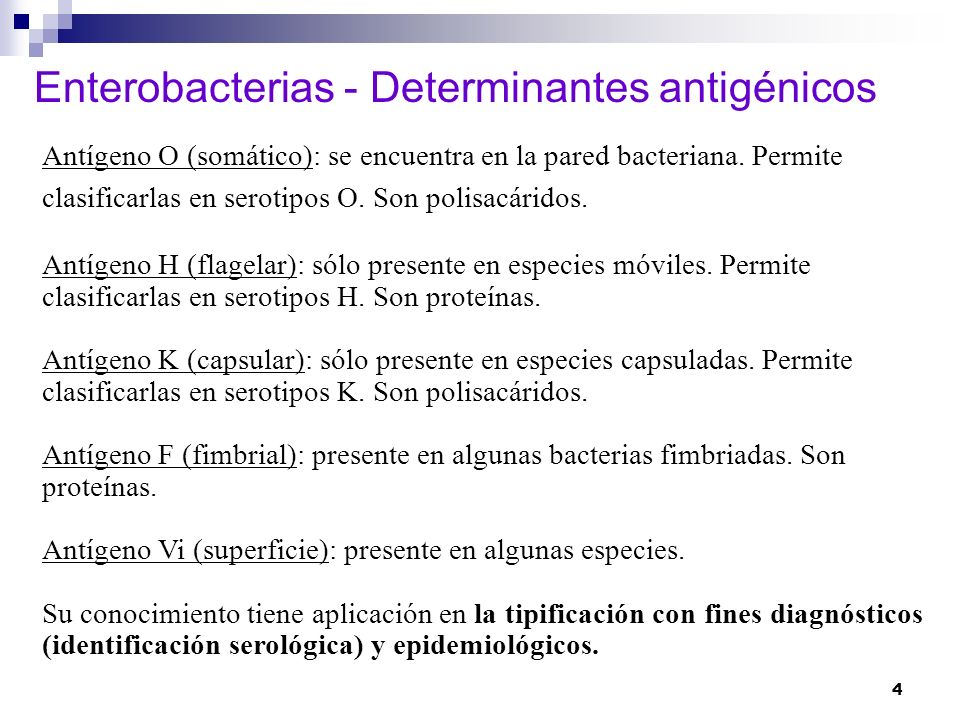 Enterobacterias - Determinantes antigénicos