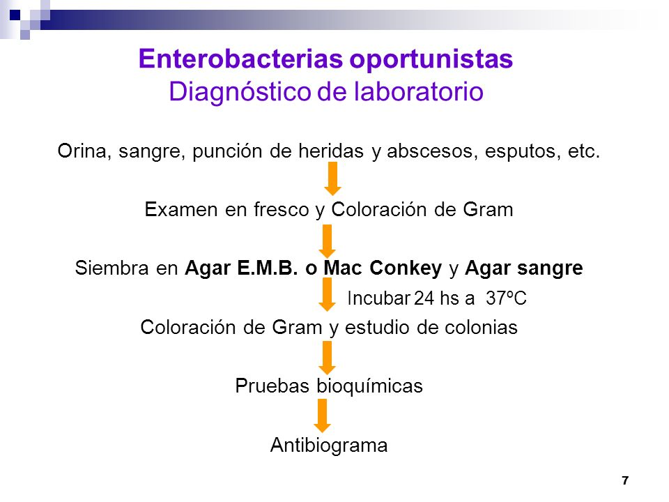 Enterobacterias oportunistas Diagnóstico de laboratorio