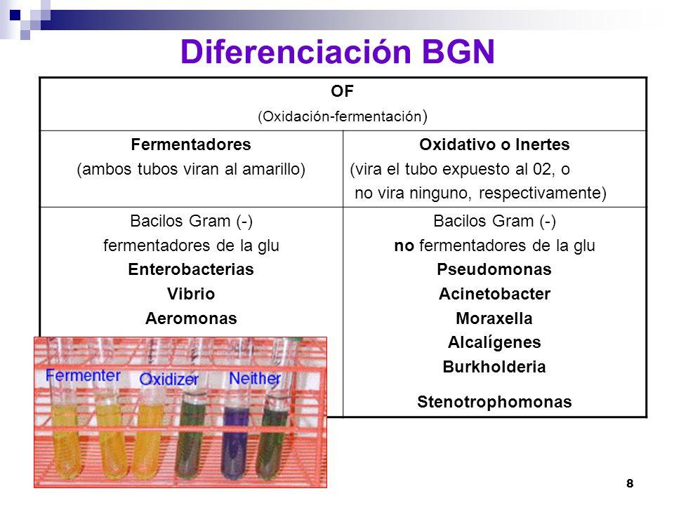 Diferenciación BGN OF Fermentadores (ambos tubos viran al amarillo)