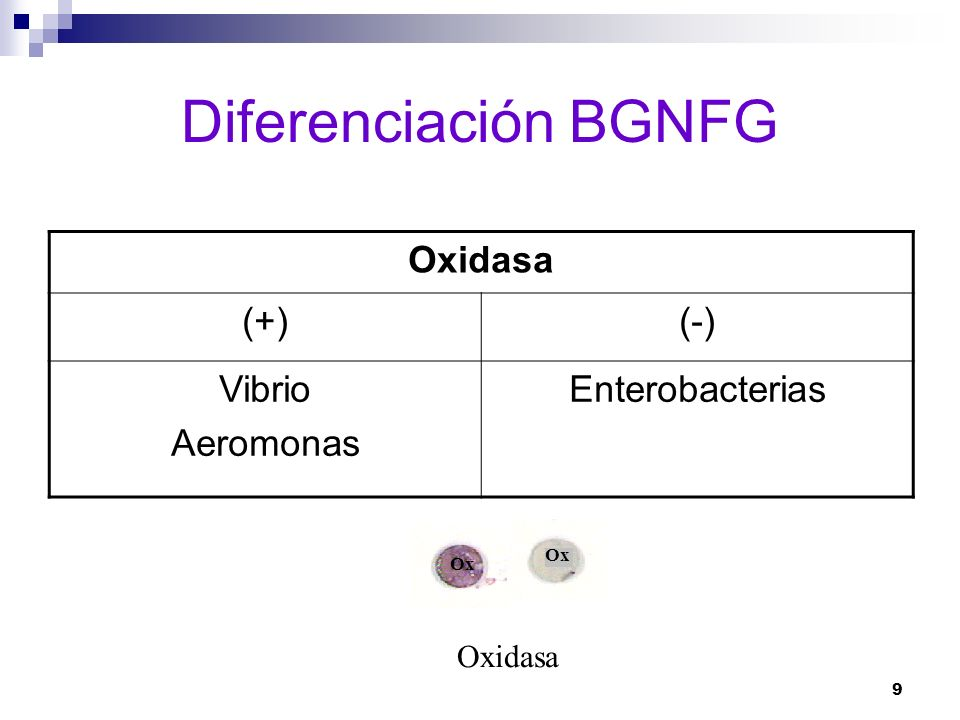 Diferenciación BGNFG Oxidasa (+) (-) Vibrio Aeromonas Enterobacterias