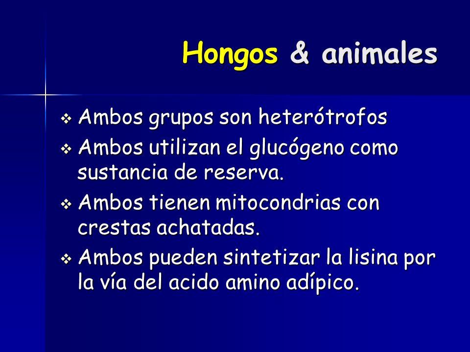 Hongos & animales Ambos grupos son heterótrofos